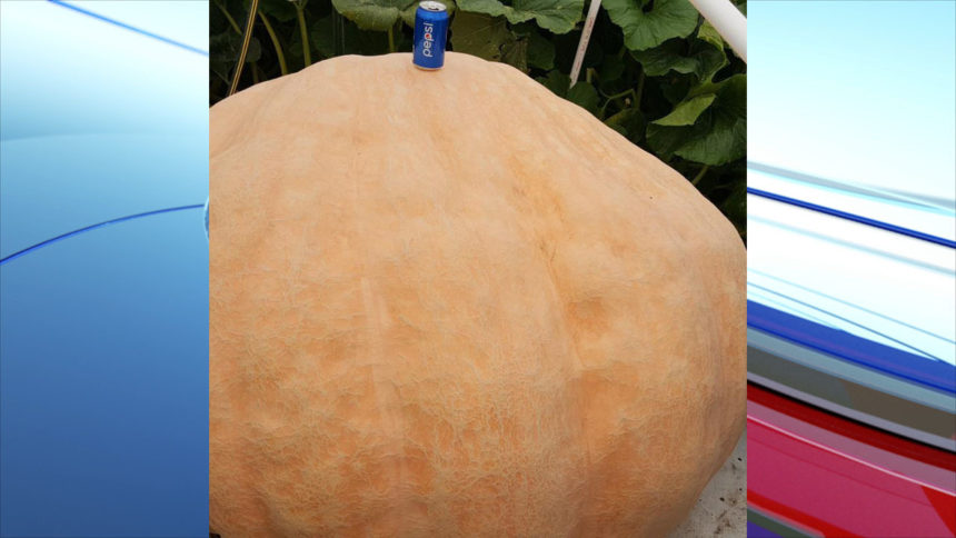 Andy Corbin biggest pumpkin3_1571438208157.jpg_39529273_ver1.0_1280_720