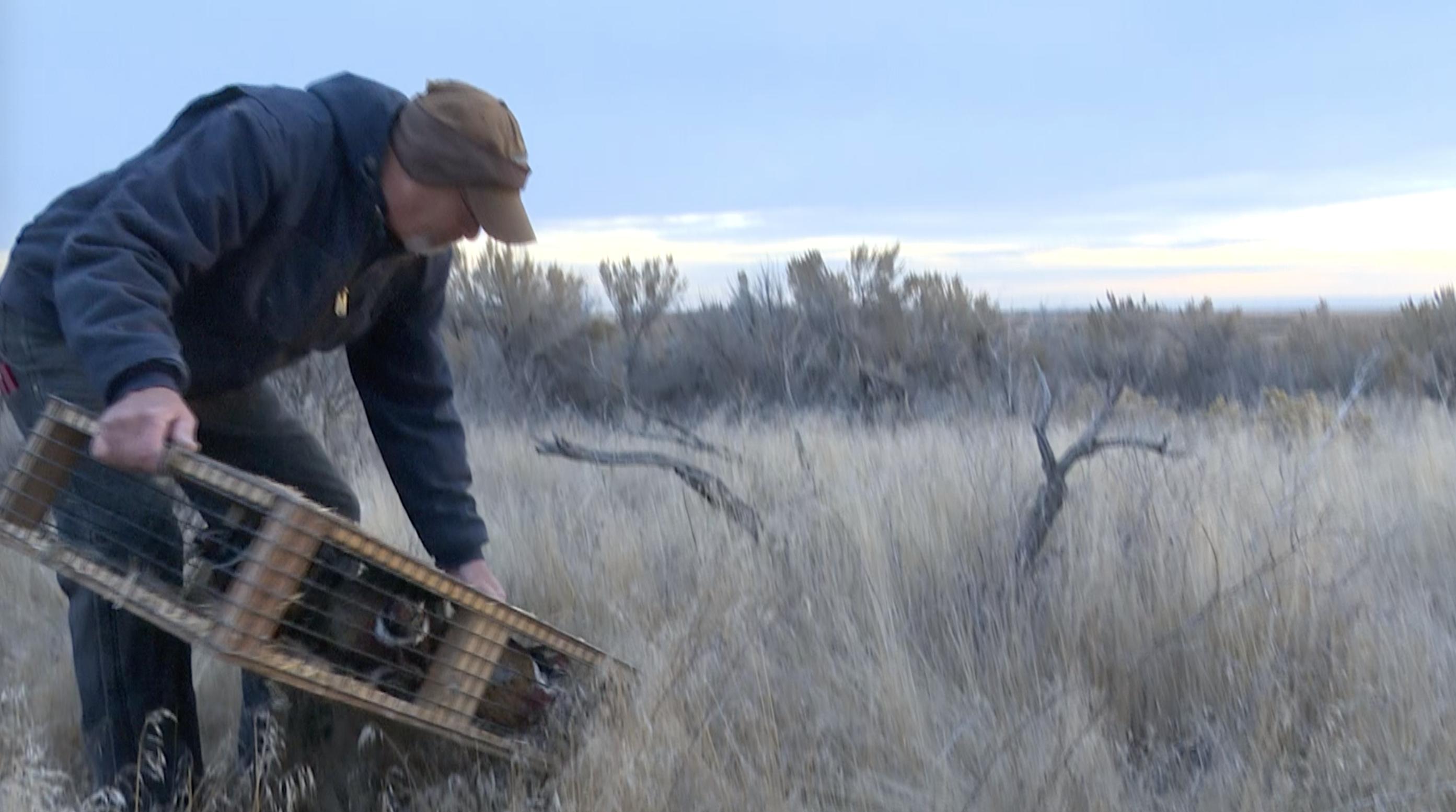 rick gardner releasing pheasants