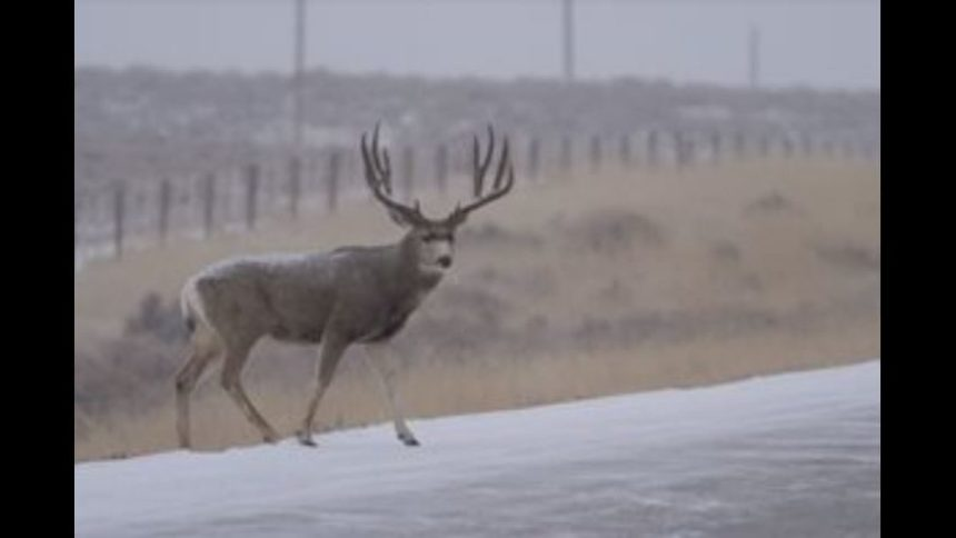 deer crossing_1573066578386.JPG_39594979_ver1.0_1280_720